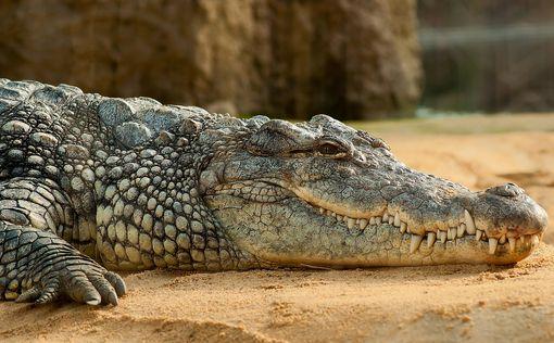 Границу с Иорданией перешел крокодил