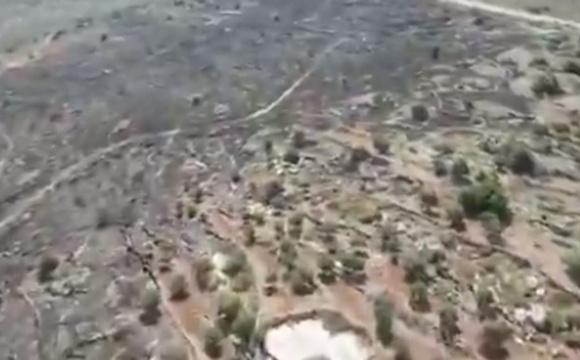 В Израиле за 5 дней вспыхнуло 800 пожаров
